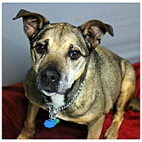 Adopt A Pet :: Rose - Forked River, NJ