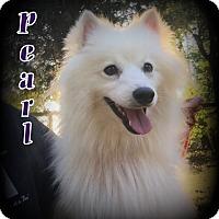 Adopt A Pet :: Pearl - Denver, NC