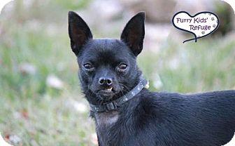 Chihuahua Mix Dog for adoption in Lee's Summit, Missouri - Freeway