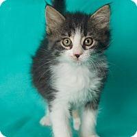 Adopt A Pet :: Kirby - Gilbert, AZ