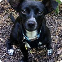 Adopt A Pet :: Elsa - Fennville, MI