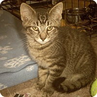 Adopt A Pet :: DANE - Medford, WI