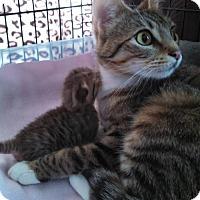 Adopt A Pet :: Muffin - C8882ss - Burlington, WA