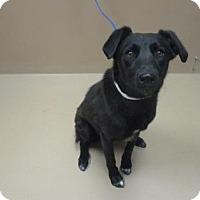 Adopt A Pet :: DEXY - Reno, NV