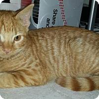 Adopt A Pet :: Capri - Glendale, AZ
