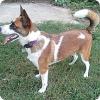 Adopt A Pet :: Sadie - Pulaski, TN