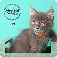 Adopt A Pet :: Leo - Friendswood, TX