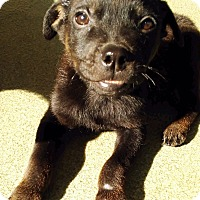 Adopt A Pet :: CURRY (video) - Los Angeles, CA