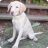 Adopt A Pet :: YAMI- SO SWEET! - WOODSFIELD, OH