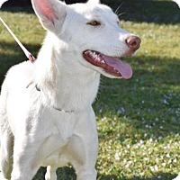Adopt A Pet :: Winter - Jupiter, FL