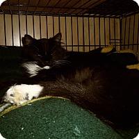 Adopt A Pet :: GAVIN - Medford, WI