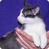 Adopt A Pet :: Maya - Elmwood Park, NJ