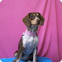 Adopt A Pet :: CARMEN - Poteau, OK