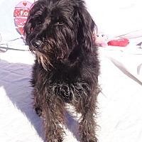 Adopt A Pet :: Chum - West Chicago, IL