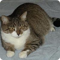 Adopt A Pet :: Poppy - Washington, VA