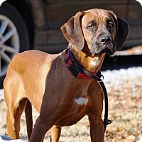 Adopt A Pet :: Vivienne - Frederick, MD