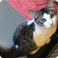 Adopt A Pet :: Raymond - Plano, TX
