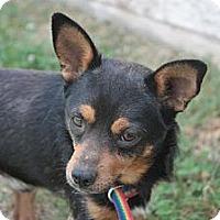Adopt A Pet :: Touk - Stilwell, OK