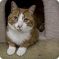 Adopt A Pet :: Romeo - Lancaster, MA