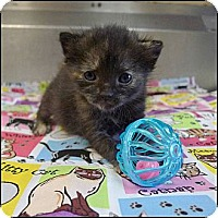 Adopt A Pet :: Caramel - Miami, FL