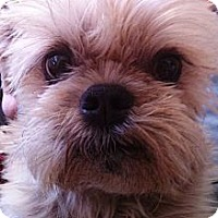 Adopt A Pet :: TOBY - in Scottsdale, AZ. - Los Angeles, CA