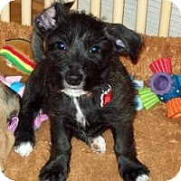 Adopt A Pet :: Pippi - The Villages, FL