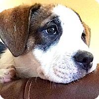 Adopt A Pet :: Princess Pooky - Cibolo, TX