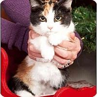 Adopt A Pet :: Wildfire - Owensboro, KY