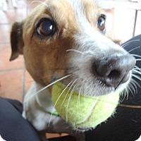 Adopt A Pet :: Bennie - Miami, FL