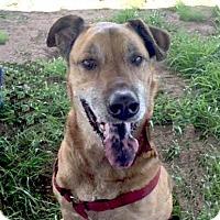 Adopt A Pet :: Bentley - Petaluma, CA