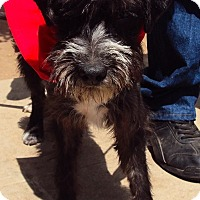 Adopt A Pet :: Dante (Baby Boy) - San Diego, CA