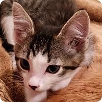 Adopt A Pet :: Keef - Portland, OR