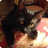 Adopt A Pet :: Abrazo (Hugs) - Woodland, CA