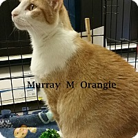 Adopt A Pet :: Murray - Brandon, FL