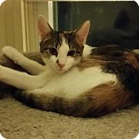 Adopt A Pet :: Awesome Zelda!! - Old Bridge, NJ