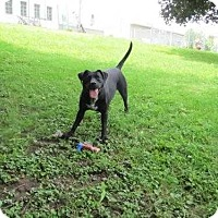 Adopt A Pet :: Hope - Clinton, IA