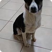 Adopt A Pet :: Zoey - Manhasset, NY