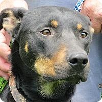Adopt A Pet :: Zen - Germantown, MD