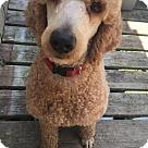 Adopt A Pet :: Porter