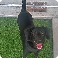Adopt A Pet :: Princess - Nashville, TN