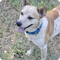 Adopt A Pet :: Duncan - Ormond Beach, FL