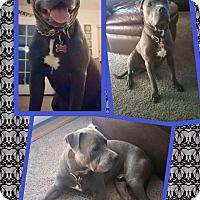 Adopt A Pet :: Augustus - Scottsdale, AZ
