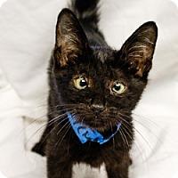 Adopt A Pet :: Wally - Oakland Park, FL