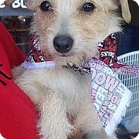Adopt A Pet :: Ivy - San Juan Capistrano, CA