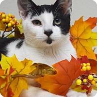 Adopt A Pet :: Bandit - Dublin, CA