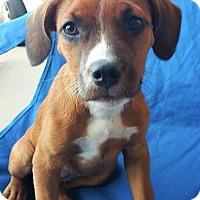 Adopt A Pet :: Janeway - Wichita Falls, TX