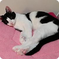 Adopt A Pet :: Beamer - Cleveland, OH