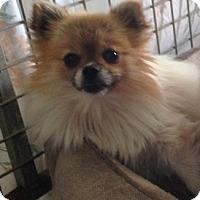 Adopt A Pet :: Tiny Dancer - Temecula, CA