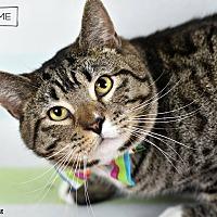Adopt A Pet :: Skip - Wayne, PA