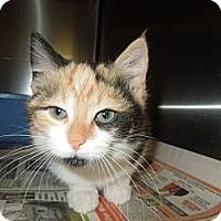 Adopt A Pet :: Shiloh - Medina, OH
